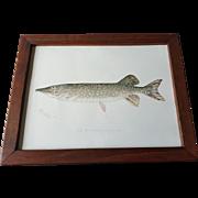 Original Denton Pickerel Chromolithograph