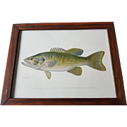 Original Denton Small Mouthed Black Bass Chromolithograph