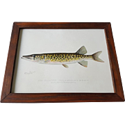 Original Denton The Pike Chromolithograph