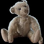 Fabulous 12-inch Antique Steiff Teddy Bear, Circa 1908