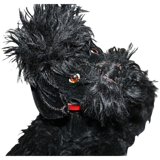 Large Black Mohair Poodle Dog, German, post war, 18 inches tall