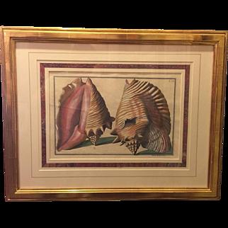 Pietro Anonio Pazzi / Sea Shells / T34 / Gold Leaf Frame / Conch