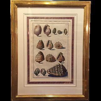Pietro Anonio Pazzi / Sea Shells / T40 / Gold Leaf Frame
