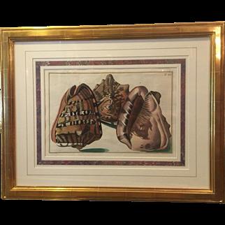 Pietro Anonio Pazzi / Sea Shells / T41 / Gold Leaf Frame