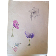 Antique drawing, colored flowers, Flemish area early XX Century