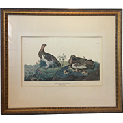 "Audubon Print ""Willow Grous or Large Ptarmigan,"" Matted in Gilt Frame"