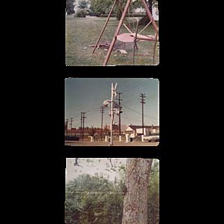William Eggleston, Untitled: three small photographs