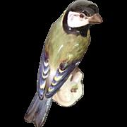 Antique Meissen China Fine Colourful Blue Tit Bird