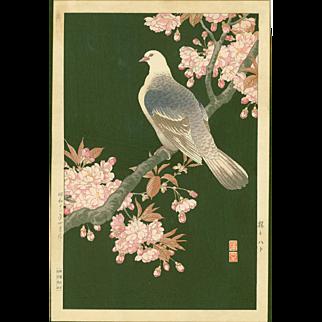 Nishimura Hodo - Pigeon and Cherry - 1937 Japanese Woodblock Print