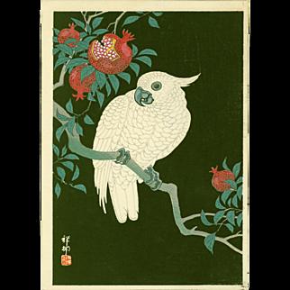 Ohara Shoson (Koson)  - Cockatoo and Pomegranate at Night - Japanese Woodblock Print