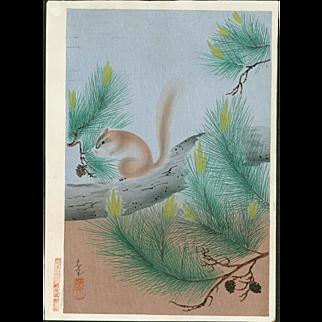 Ohno Bakufu - Squirrel in a Pine Tree - Japanese Woodblock Print