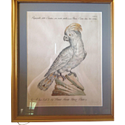Antique 18th Century (1767--1776) Etching Colored by Hand on Laid Paper of a Cockatoo