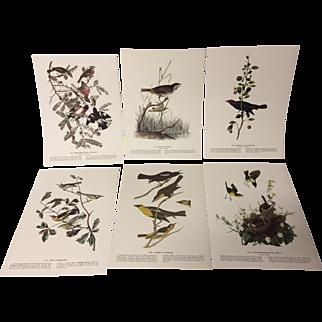 Set of 6 Audubon Bird Prints from 1940s