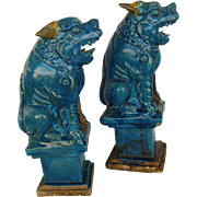 Chinese Turquoise Seated Lion (Pair)