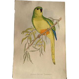 Orange Bellied Parakeet A F Lydon Hand Colored Engraving Parrots In Captivity