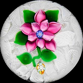 Saint Kilda pink double clematis on latticinio cushion paperweight