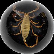 Vintage Scorpion Under Glass Paperweight
