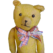 An Old Bear with Great Character