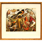 Birds Chromolithograph 1890