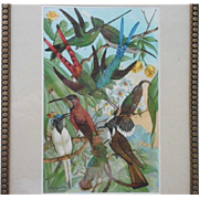 Hummingbirds - chromolithograph, 19th century
