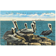 FL St. Petersburg Pelican's waiting for feeding Ship in Background 40's Linen Postcard
