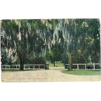 FL Jacksonville Entrance to Riverside Park Postcard 1920's Spooky Moss Tree's