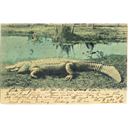 FL Jacksonville Big Joe Alligator Water Works Roadside Attraction Postcard