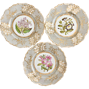 Three Ridgway dinner plates, botanical studies, Rococo Revival 1830-1837