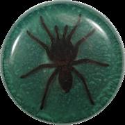 Huge Vintage Tarantula Spider Paperweight