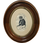 Mahogany Oval Frame With 19th Century print of Macacus Silenus Wanderoo Monkey Plate #14