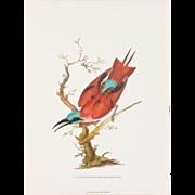 19th Century Bird Art Series Wall Art Print by Edward Donovan (9.5 x 7 in)