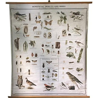 Early 1900s Birds and Insects scientific educational chart
