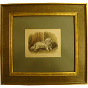 1860's Hand-Colored Engraving of Maltese Dog, Framed with Glass