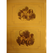 Matched Set of Two Hand Colored Engravings From 1847, Poodle and Southern Hound, By Gilbert & Gihon