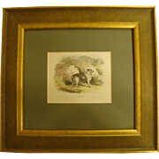 1860's Hand-Colored Engraving of Truffle Dog, Framed Under Glass