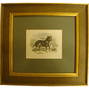 1860's Hand Colored Engraving of Collie Dog, Framed with Glass