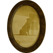 Wonderful 1921 Photo of a Beloved Labrador Retriever Dog in Original Faux Tiger Wood Frame