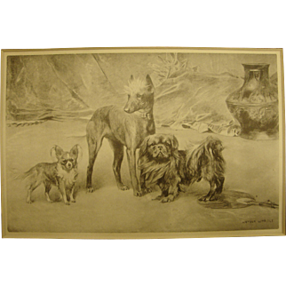 1901 Arthur Wardle Dogs Original Bookplate Print With Pekingese, Papillon and Chinese Crested