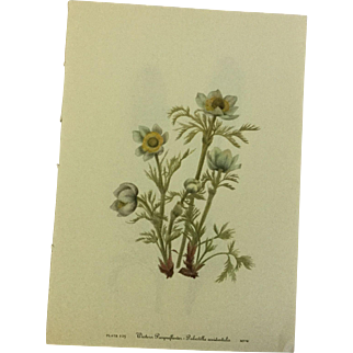 Vintage prints from Mary Vaux Walcott's 1953 edition of Wildflowers of North America