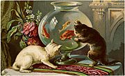 The Victorian Goldfish