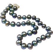 11-12mm Cultured Black Pearls in Tahitian Peacock Green Indigo Blue Purple Color