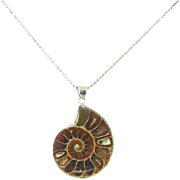 Ammonite/Ammolite Pendant and Sterling Silver Chain Necklace