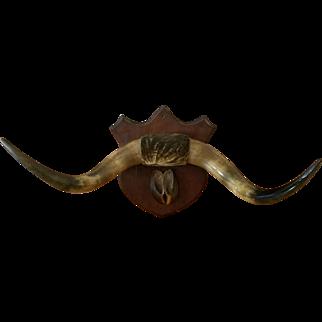 Set of very old steer horns