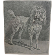 Antique, 19th Century,  Poodle, Dog,  Etching