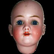 Large Handwerck/ Halbig Bisque Head TLC