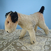 Adorable Wool Terrier