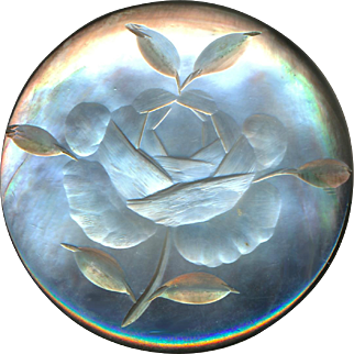 Button--Large Late 19th C. Bas Relief Intaglio Carved Pearl Rose