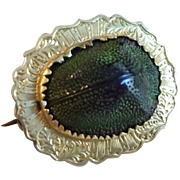 Victorian 14k Gold Real Scarab Beetle Pin
