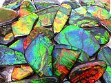 Ammolite Rainbows