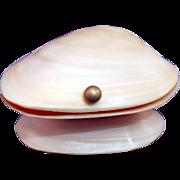 Pink Bi-valve Shell box; Vintage; Vanity;